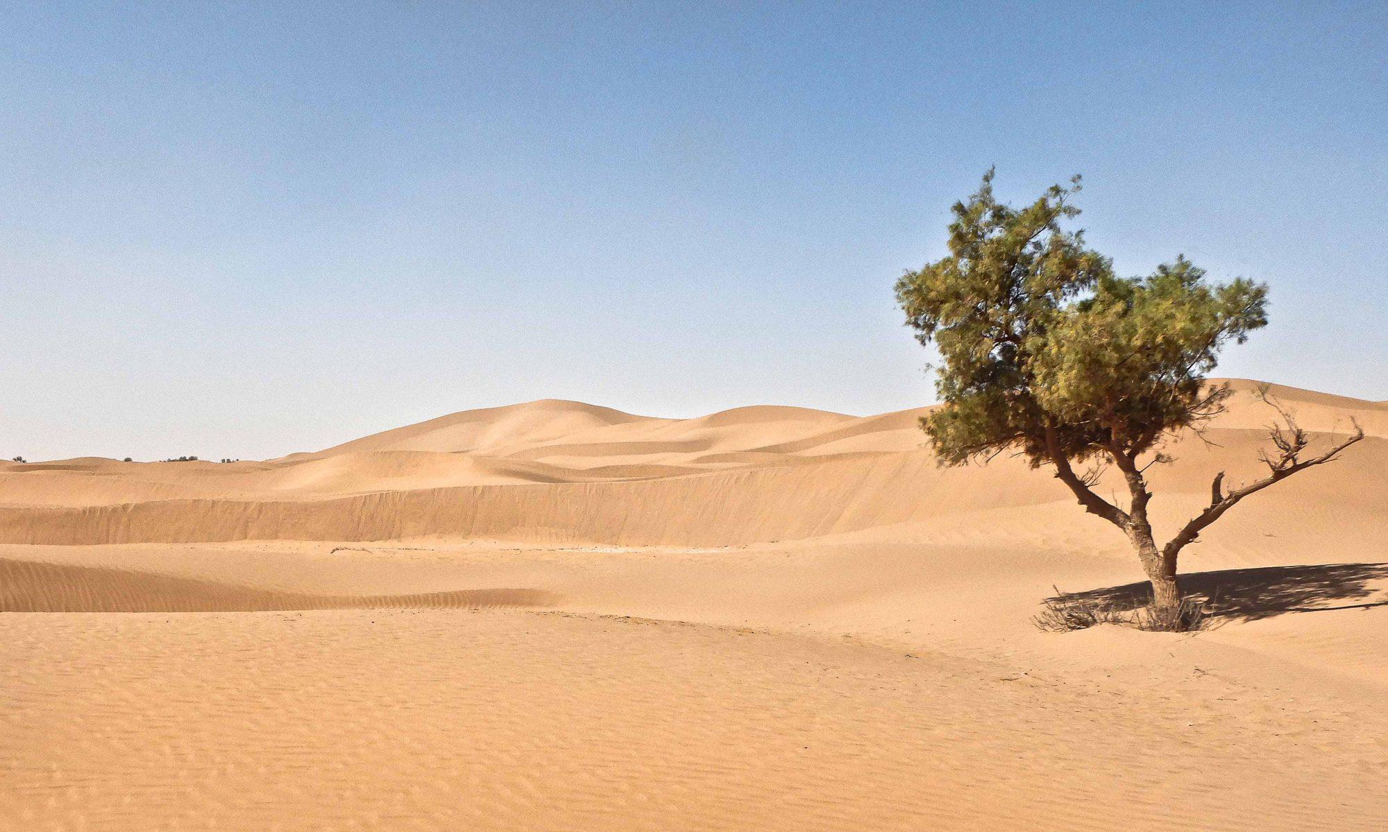 Sahara Karawane