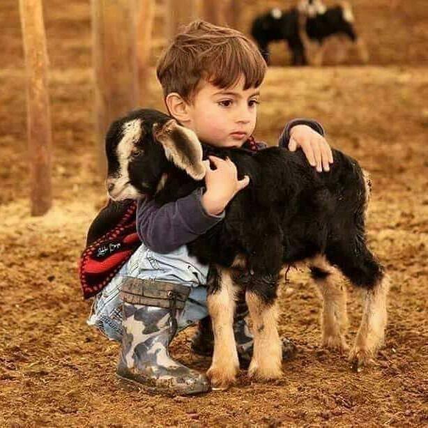 Ein niedlicher Nomadenjunge umarmt mit verträumten Blick ein kleines Zicklein